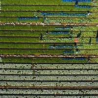 Salades_ferme_Hardy_Sannerville_mai_2020_31.jpg